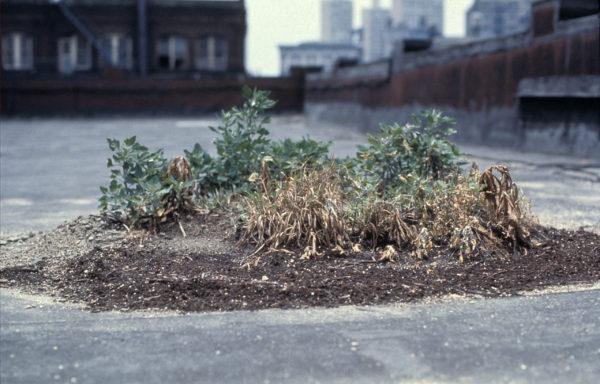 Hans Haacke, Bowery Seeds, 1970 © Hans Haacke VG Bild-Kunst, Bonn 2020