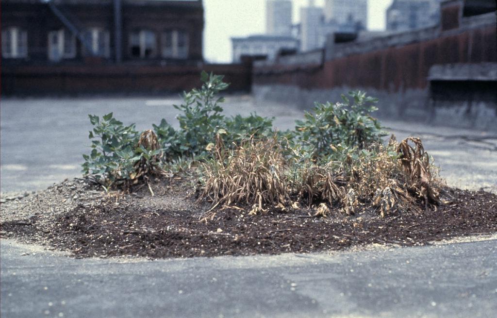 Hans Haacke, Bowery Seeds, 1970, © Hans Haacke VG Bild-Kunst, Bonn 2020